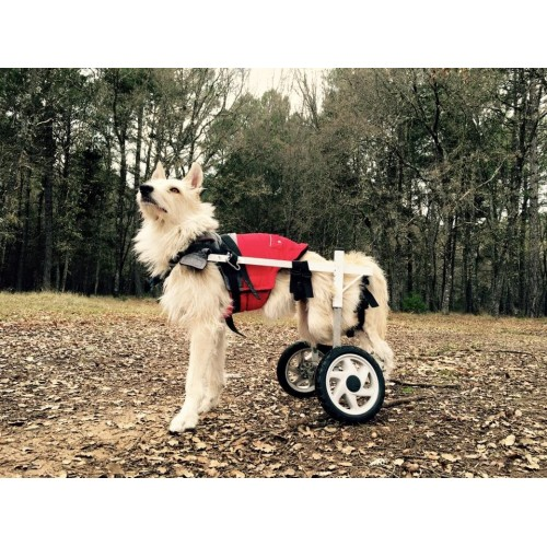 Kart para Cão